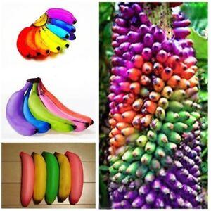 200Stk-Regenbogen-Bananen-Tree-Samen-Bonsai-Baum-Fruechte-Saat-Saatgut-Garten
