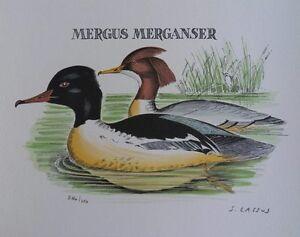 Serge-Lassus-LES-CANARDS-SAUVAGES-Lithographie-signee-250ex