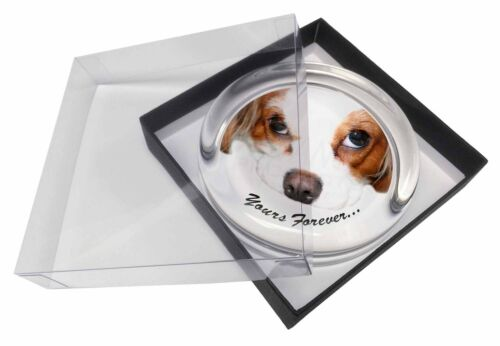 Cavalier King Charles 'Yours Forever' Glass Paper in Gift Box , ADSKC57PW