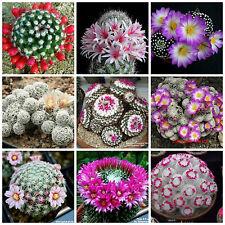 20 semillas mezcla de Mammillaria, cactus mix,plantas suculentas,seeds mix S