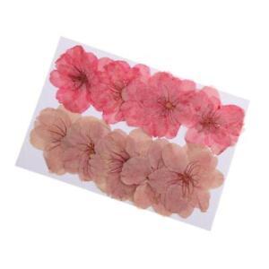 10pcs-Beautiful-Pressed-Dried-Sakura-Flowers-Cherry-Blossom-for-Scrapbooking