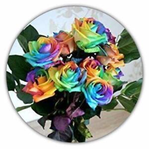 Regenbogen-Rose-Einhornrose-Bunte-Rose-50-Samen-Rosensamen