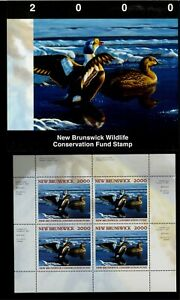 NEW-BRUNSWICK-7M-2000-KING-EIDERS-CONSERVATION-STAMP-MINI-SHEET-OF-4-IN-FOLDER