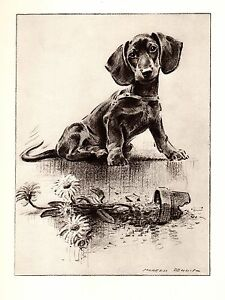 1946-Antique-DACHSHUND-Print-Dog-Art-Gallery-Wall-Art-Gift-for-Dog-Lover-3180