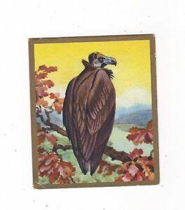 19-353-SAMMELBILD-MONCHSGEIER