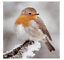 8x-Eco-Friendly-Recycled-Wildlife-Trust-Animal-Christmas-Cards-Various-Designs thumbnail 7