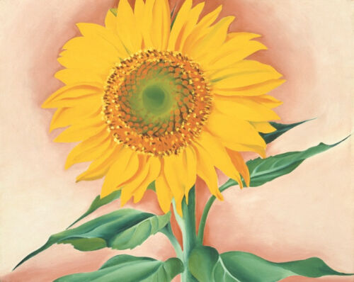 FLORAL ART PRINT A Sunflower from Maggie 1937 by Georgia O/'Keeffe Poster 11x14