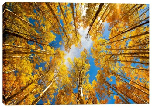 """Giclee Canvas Wall Art 26/"""" x 40/"""" Epic Graffit /""""Towering Aspens/"""" by Darren White"""