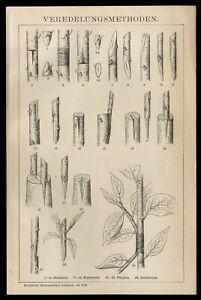Original-Holzstich-Tafel-1895-Div-Veredelungen-Okulieren-Kopulieren-Pfopfen