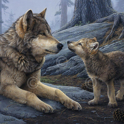 WOLF ART PRINT Brother Wolf (detail) - Daniel Smith 12x12 Wolves Wildlife Poster