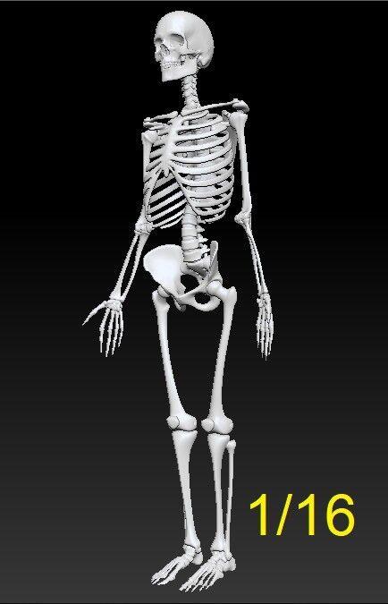 1  16 - skala skelett harz - kit.