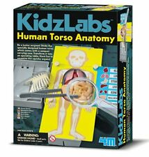 4M Kidz Labs HUMAN TORSO ANATOMY Educational Organs Science Kit 8+