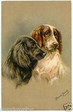 portrait de chiens EPAGNEUL BLEU DE PICARDIE.EPAGNEUL FRANCAIS.DOGS