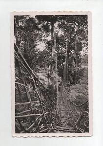 Mittelgross-Kongo-ein-bruecke-Creepers-A6578