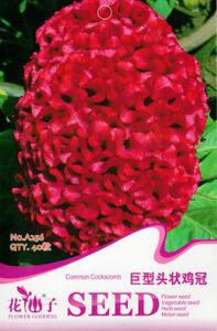 Original-Package-40-Giant-Head-Shaped-Cockscomb-Seeds-Celosia-Cristata-Seed-A256