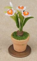 1:12 Scale White & Orange Orchid In A Pot Dolls House Flower Garden Accessory 42