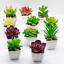 Artificial-Succulent-Plants-Small-Fake-Succulent-Bonsai-Garden-Miniature-Decor thumbnail 1