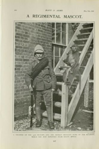 1903 PRINT REGIMENTAL MASCOT TROOPER 14th HUSSARS MONKEY RETURNED SOUTH AFRICA