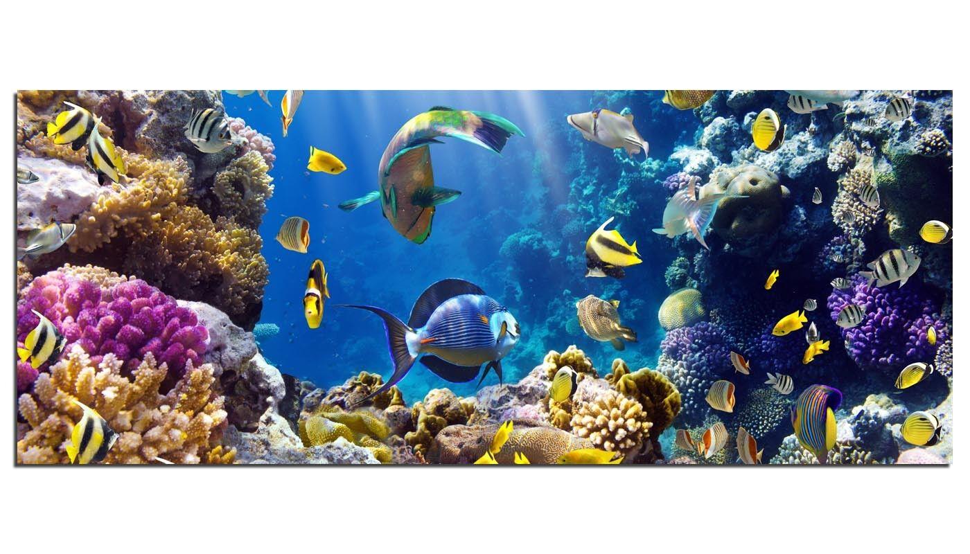 Photos de la fresque ag-02077 MultiCouleure récif de corail 125 x 50 cm