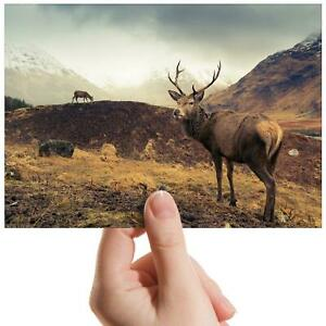 Wild-Stag-Deer-Mountains-Small-Photograph-6-034-x-4-034-Art-Print-Photo-Gift-15823