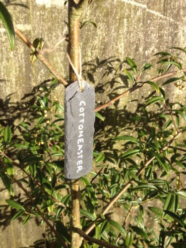 100 x Natural Slate Hanging Plant Name Labels Price Gift Tags Garden Marker Sign