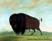Buffalo Bull Grazing on The Prairie by George Catlin - 1832 - Historic Art Print