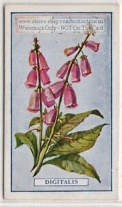 Digitalis-Foxglove-Plant-Drug-Medicine-Poison-Fingerhut-100-Y-O-Trade-Ad-Card-G