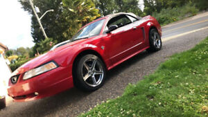 1999 Ford Mustang gt. Convertible. 35 year Anniversary. -$7000