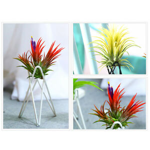 KQ-Flower-Plant-Balcony-Garden-Bonsai-Pot-Metal-Rack-Flowerpot-Holder-Bracket-D