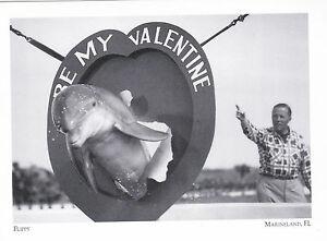 Postcard-034-Flippy-034-1952-Marineland-Florida-246