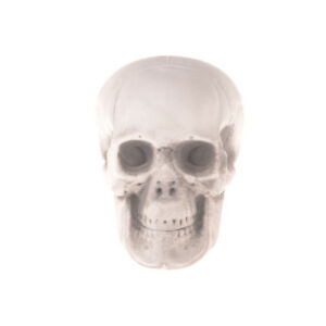 Human-Skull-Decor-Prop-Skeleton-Plastic-Head-Halloween-Coffee-Bars-Ornament-HGUK