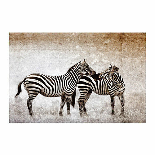 NEW IKEA  BJORKSTA PICTURE NO FRAME  CANVAS ONLY 30 X 46'' ZEBRA