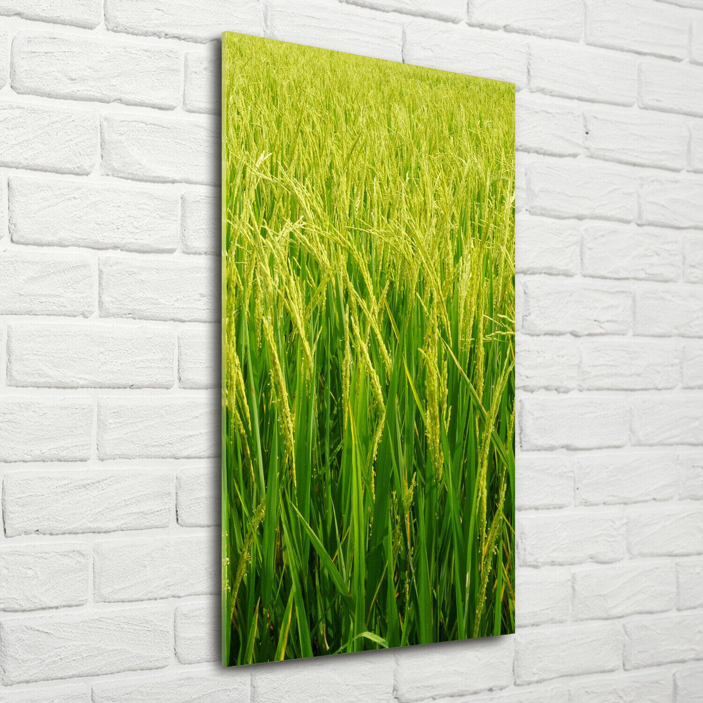Wandbild Kunst-Druck auf Hart-Glas hochkant 70x140 Reisplantage