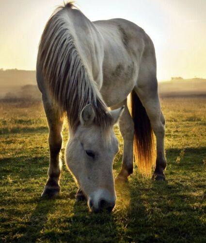 Grass Seed For Grazing Horses Reseeding Horse Pasture Pony Paddocks Equine Use
