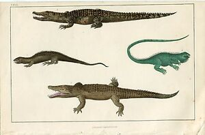 Animales-Crocodile-of-The-Nile-and-Other-Edited-By-Fullarton-1860