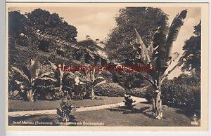 Vor 1945 ZuverläSsige Leistung 85014 Musengarten Mit Bananenhain Foto Ak Insel Mainau
