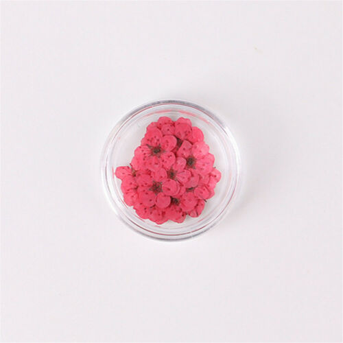 Fashion 20PCS//lot DIY Decor Dried Spiraea Flower Nail Art Tool Jewelry Crafts