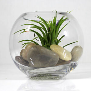 Air Plant In Small Glass Bowl Terrarium With Mixed Polished River