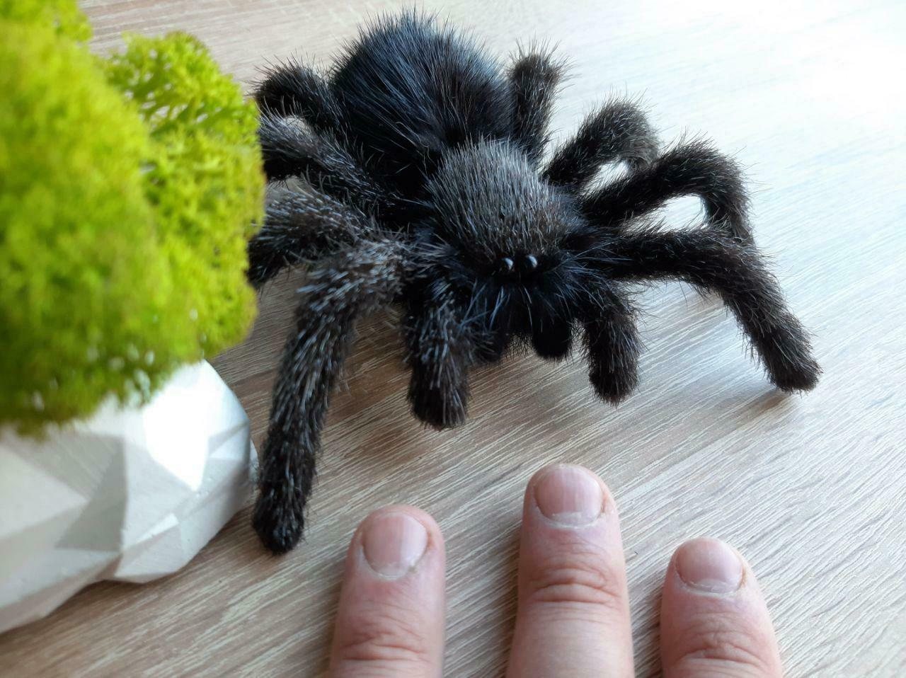 Tarantula Stuffed Animal, Plush Animal Stuffed Toy Hansa Grasshopper Realistic Crafted Handmade 6569 For Sale Online Ebay