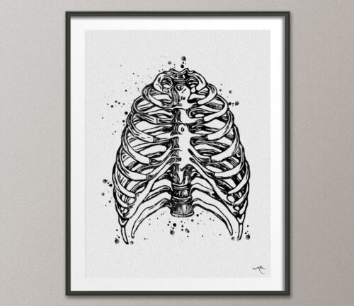 Ribcage Watercolor Print Medical Art Skeleton Medical Art Science Anatomy Art