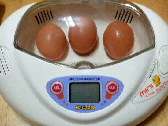 risparmia il 35% - 70% di sconto Mini R-com R-com R-com Fully Automated Digital Incubators Bird,Poultry Egg Brooder Hatchery  in vendita scontato del 70%