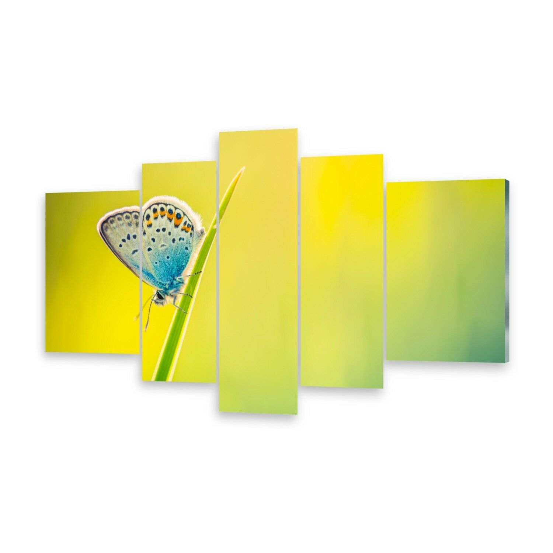 Mehrteilige Bilder Acrylglasbilder Wandbild Schmetterling