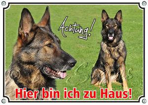Bouclier de chien berger allemand - qualité 1a, particulièrement résistant