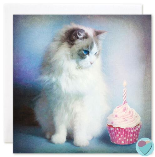Chat cartes Anniversaire Filles ami Blank toute occasion de ou de Ragdoll Cat Lover