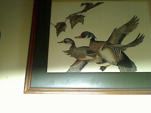 Golden eye Merganser INSTRUCTIONS-ONLY- Wood Duck House Mandarin Nest Box
