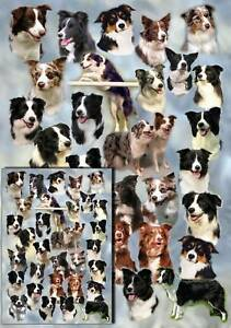 Border-Collie-Dog-Gift-Wrapping-Paper-By-Starprint