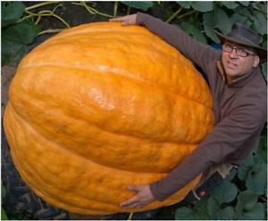 Giant Pumpkin Bonsai Vegetable 10 PCS Seeds Free Shipping 2019 Easy To Grow New