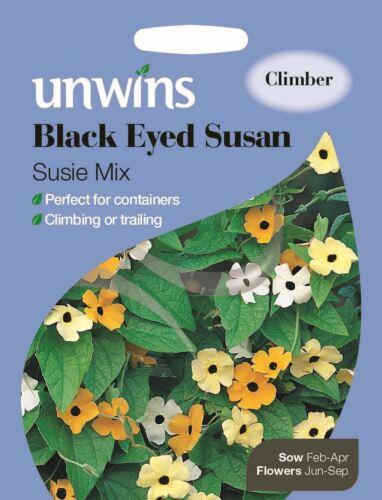 20 Seeds Black Eyed Susan Susie Mix Unwins Pictorial Packet