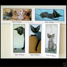Devon Rex cat painting greetings cards 5 assorted from originals Suzanne Le Good