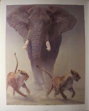 "Daniel SMITH LTD art print "" Zero Tolerance "" Elephant MINT in folder COA Lions"